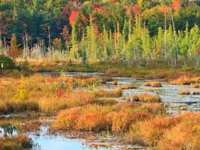 Autumn Adirondacks Marsh