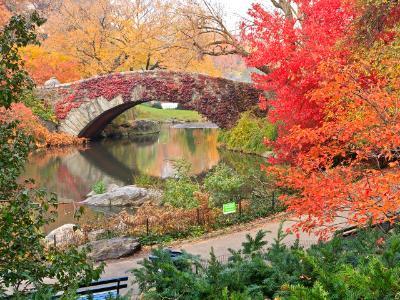 Red Ivy on Central Park Bridge