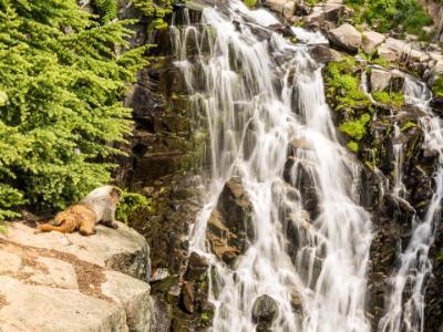 Marmot Falls