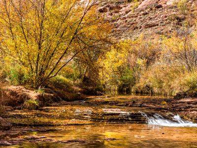 Grandstaff Canyon Stream and Autumn Tree
