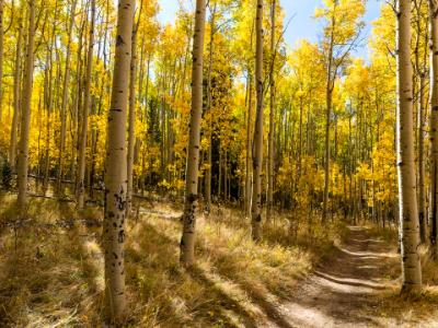 Colorful Kenosha Pass Trail