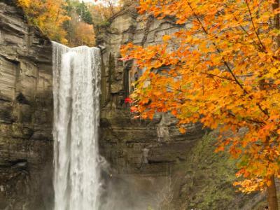 Taughannock Falls and Orange Maple