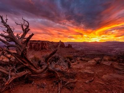 Grand Viewpoint Vivid Juniper Sunset