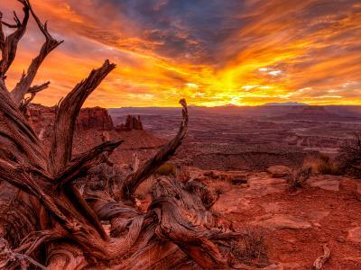 Vivid Canyonlands Textures