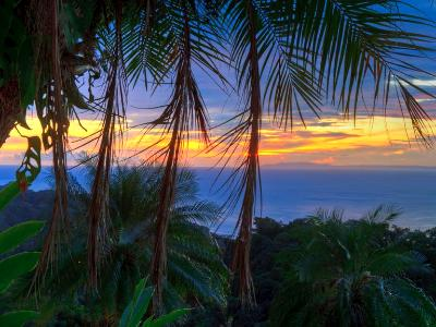 Palm Tree Sunset HDR