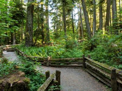 MacMillan Provincial Park Trails