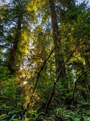 Lush Light in Lady Bird Grove