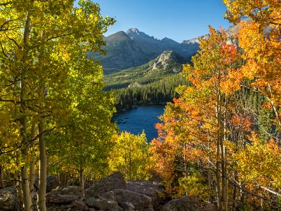 Aspen Color at Rocky Mountain National Park