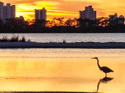 Heron Silhouette and Perdido Key