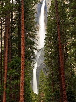 Yosemite Falls Tall Tree View