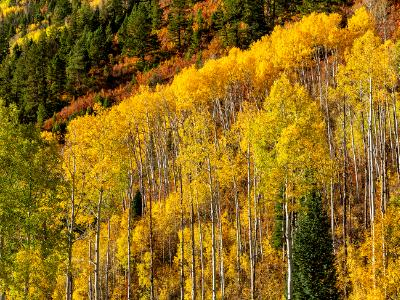 Aspen Mountainside at McClure Pass