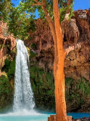 Havasu Falls Tree