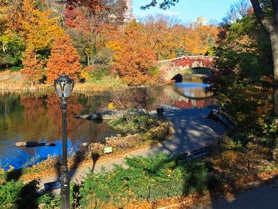 Central Park Path and Pond