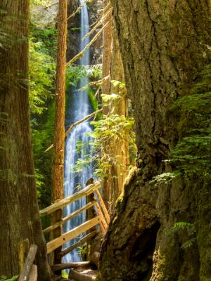 Marymere Falls and Trail
