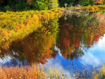 Autumn Trees Reflected in Fly Pond