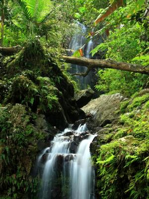 Tropical Double Falls