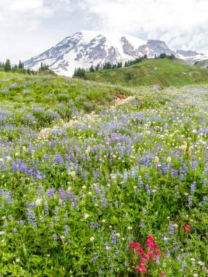Mt. Ranier Golden Gate Trail