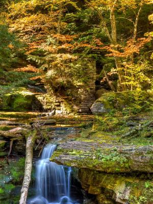 Tompkins Falls Autumn