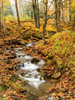 Catskills Forest Leafy Stream