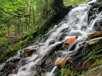 Silky Forest Cascade