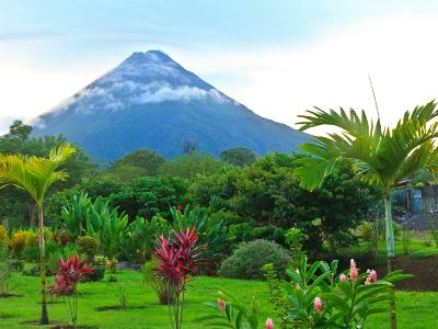 Arenal Volcano and Palm Trees
