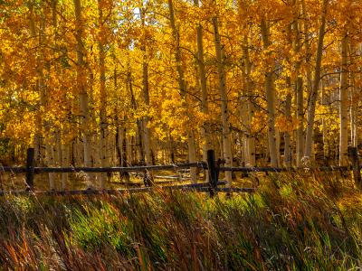 Colorful Aspen Fence