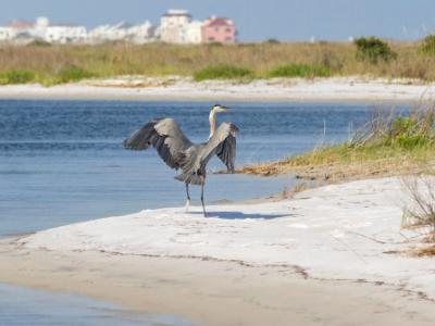 Heron Beach Landing