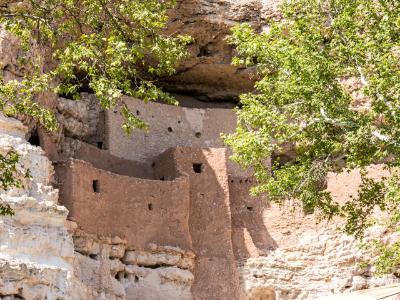 Montezuma Castle Sycamore Trees