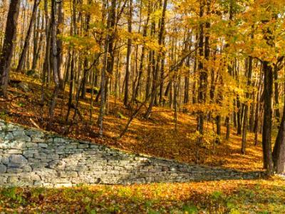Catskills Stone Wall