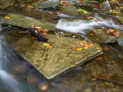 Square Stone in Autumn Creek