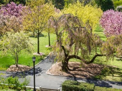 Botanic Gardens Cherry Pathways