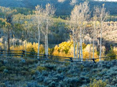 Aspen Ridge and Wooden Fence