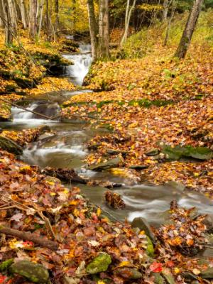 Leafy Forest Stream