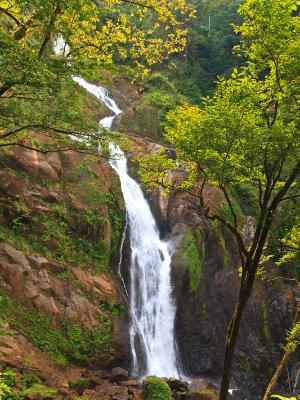 Manantial de Agua Viva Waterfalls and Trees
