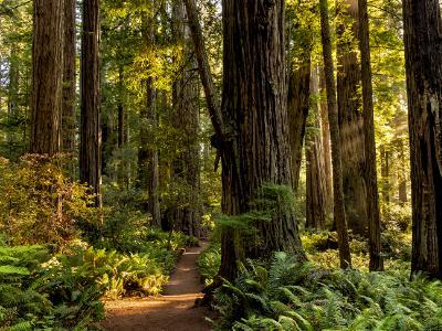 Lady Bird Grove Sunlit Trail