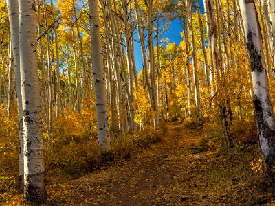 Big Aspen La Sal Forest Trail