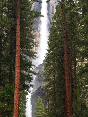 Yosemite Falls Forest View Panorama