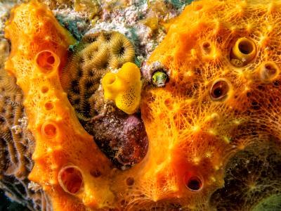Blenny Hide and Seek in Orange Sponge