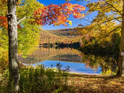 Sugar Maples on Colorful Catskills Lake