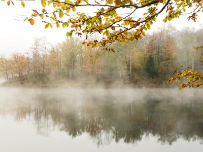 Dense Autumn Fog on Big Pond