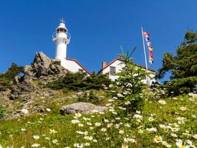 Rocky Harbour Head Light & Daisies