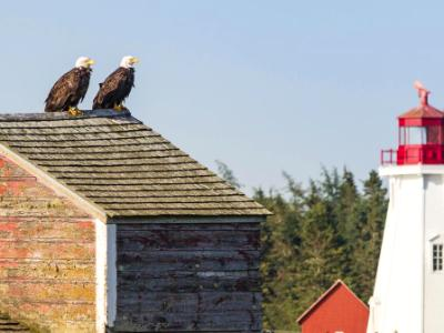 Rooftop Eagles