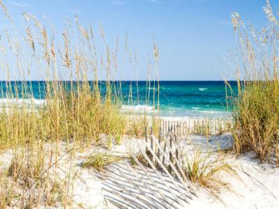Dune Fence and Sea Oats at Pensacola Beach