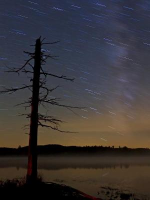 Tree Silhouette, Milky way and Star Trails