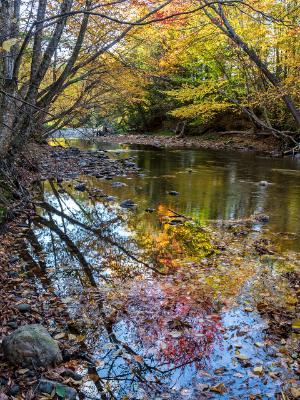 Little River Autumns Reflections