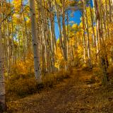 Big Aspen La Sal Forest Trail