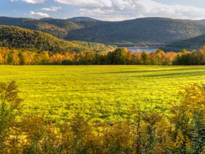 Catskills Goldenrod Autumn Panorama