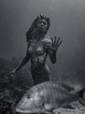 Red Snapper Mermaid