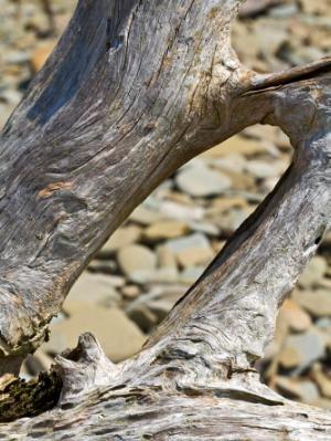 Silver Driftwood