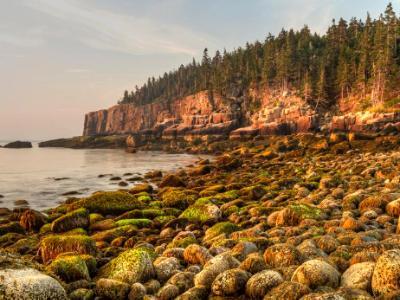 Mossy Boulders on Acadia Coast